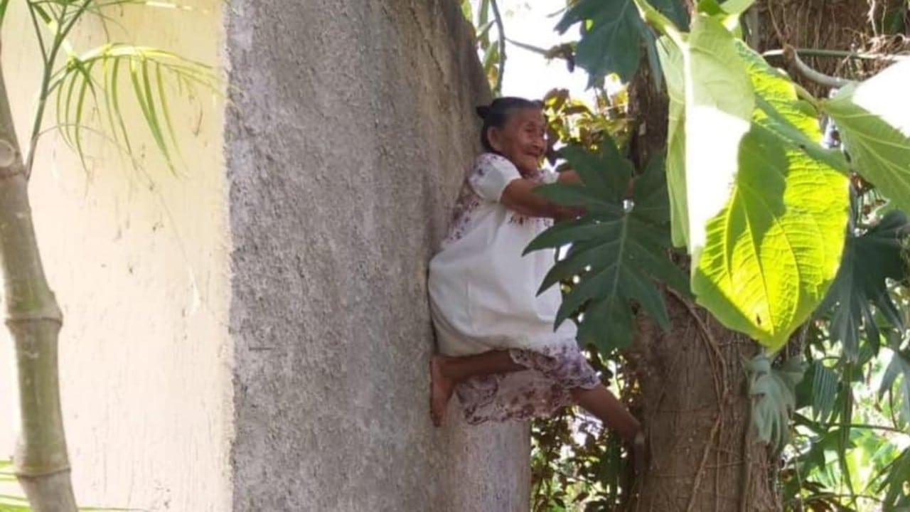 Doña Menchita Abuelita Trepa Árboles Yucatán