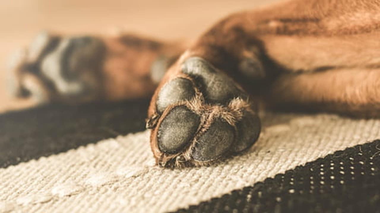 Prisión Mujer Arrastró Mató Bulldog Cinco Meses