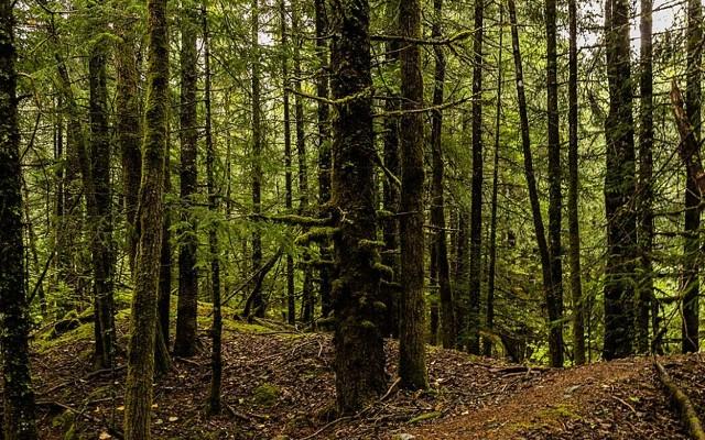 Plantar árboles cambio climático estudio