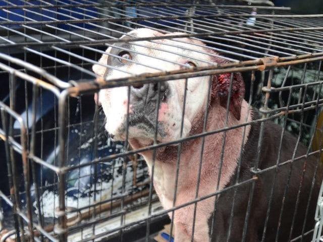 Abuelita Asesinada Perro Pitbull Veracruz