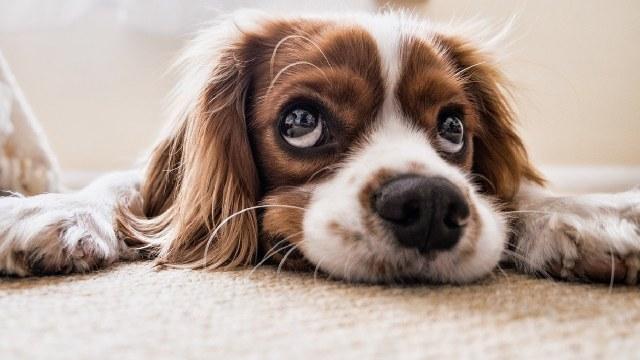 Tamaulipas prohibió cortar orejas cola a mascotas