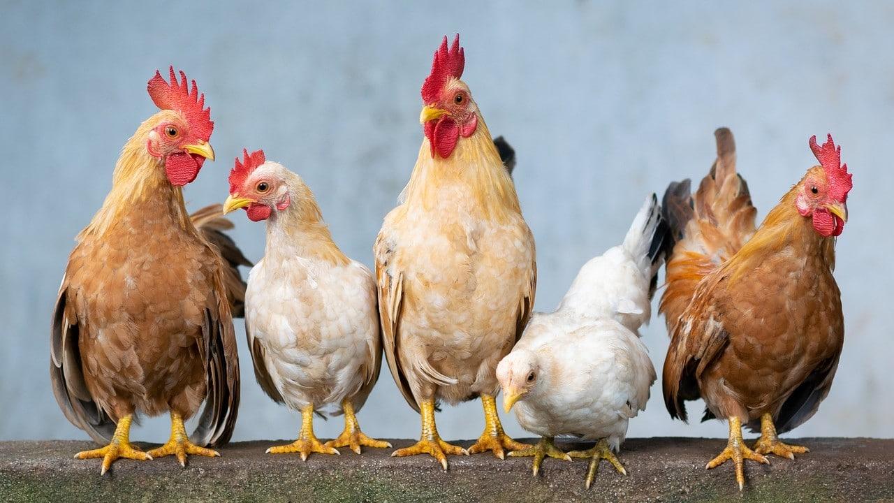 China primer caso gripe aviar