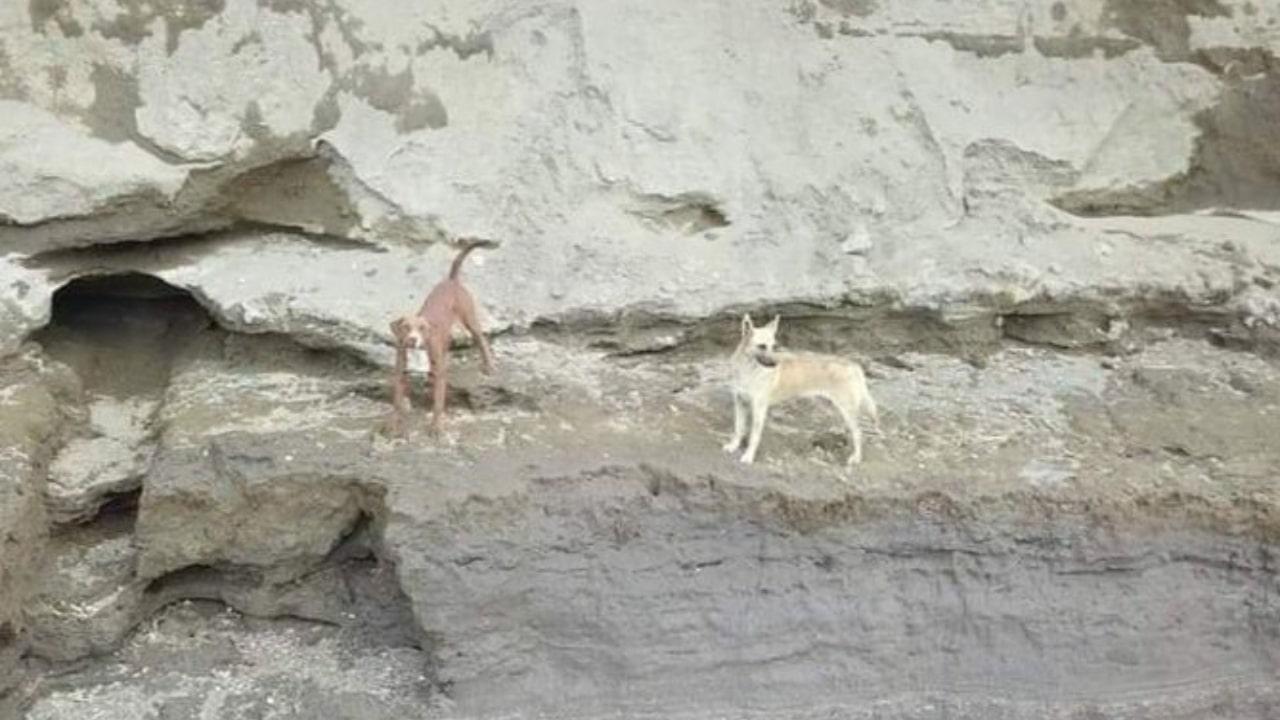 Perritos cayeron al socavón de Puebla