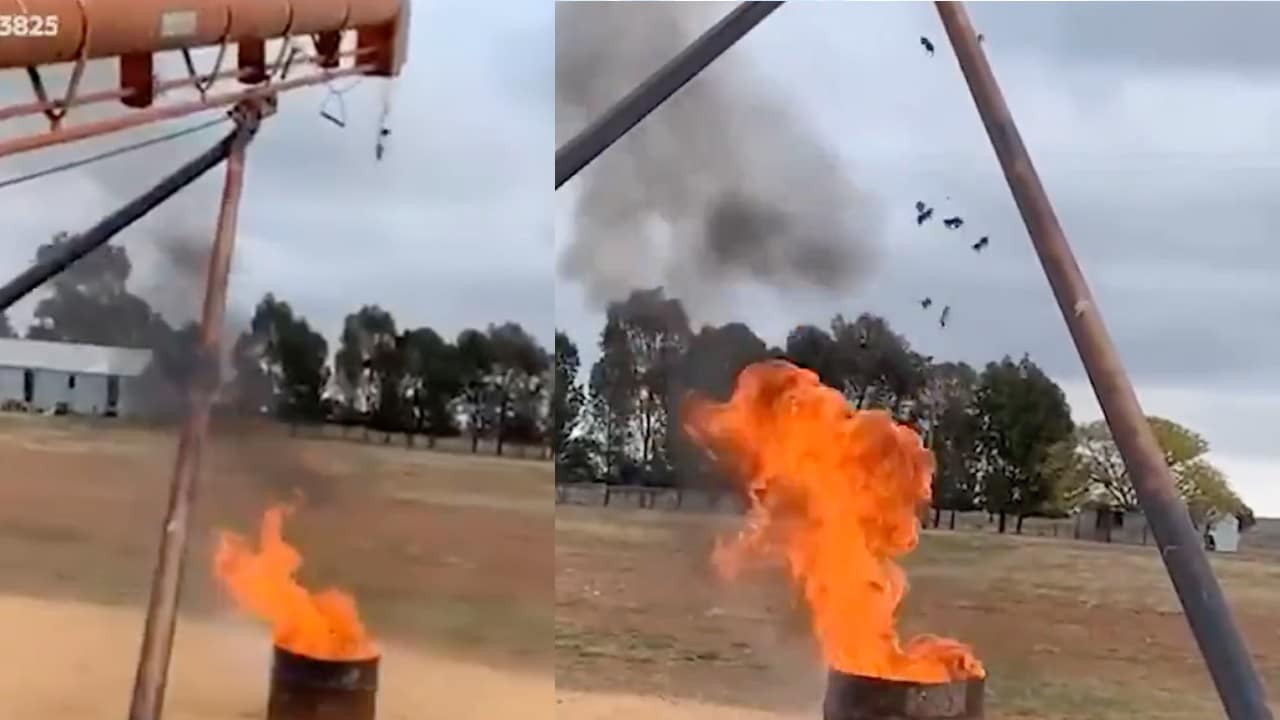 Granjero Quema Vivos Ratones Australia Video