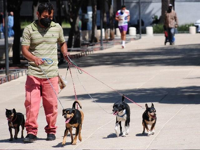 Secuestro Perro Vecino Sufría Maltrato Cárcel Colombia