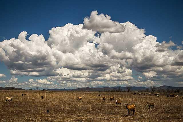 Reportan muerte de ganado por desechos mineros en río de Sinaloa