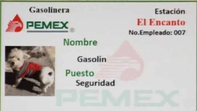 Gasolinera Tecate Contrata Perro Callejero Seguridad