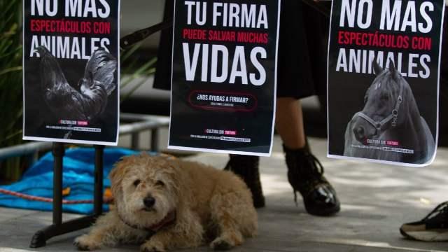 Nuevo León Dos Años Cárcel Mate Perros