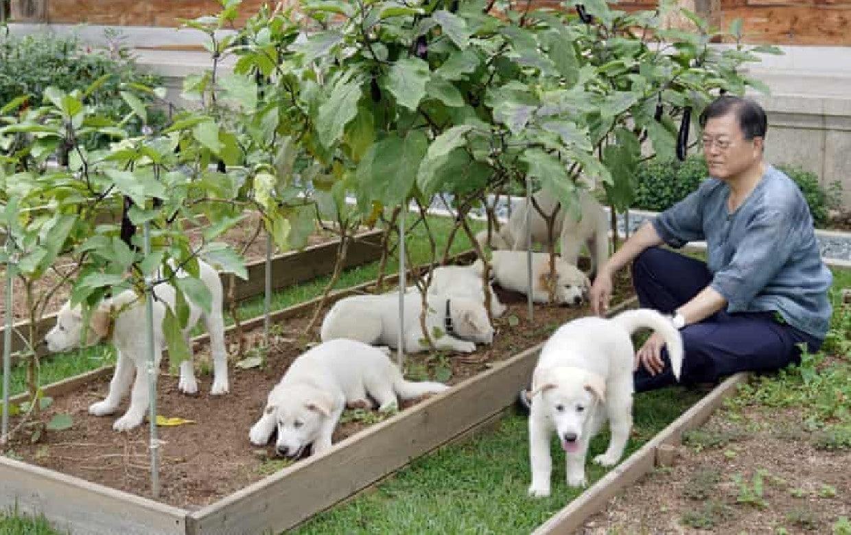 El presidente surcoreano sugiere prohibir comer carne de perro