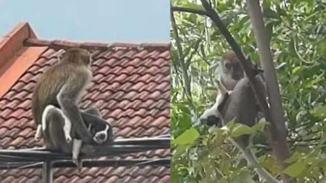 Rescatan Perrito Secuestra Mono Malasia