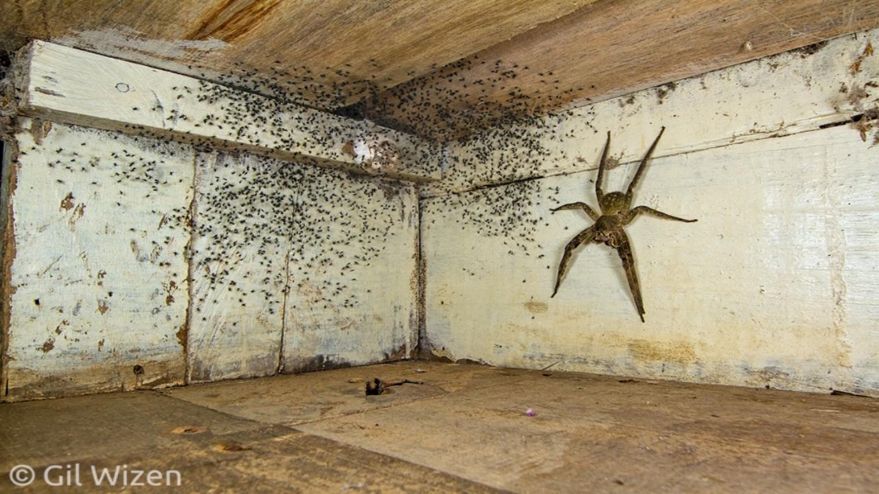 Hombre encuentra araña gigante debajo de su cama