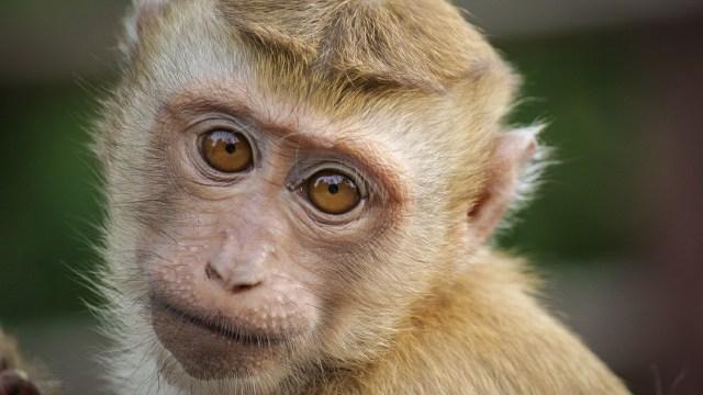 Mono viajó en un autobús