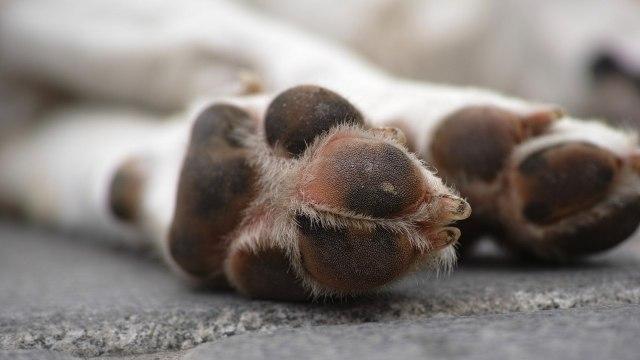 Veterinario zoofílico recibe sentencia de más de 21 años por abusar de perros