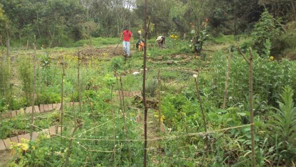El huerto trabajaron mas de 500 personas y ahora las autoridades de la Normal se acuerdan del terreno/Plumas Libres