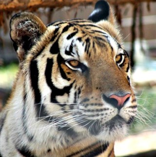 Promised Land Zoo – Branson, MO @plzoo1 #Hosted