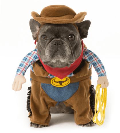 18 Cutest Halloween Dog Costumes   Just Plum Crazy