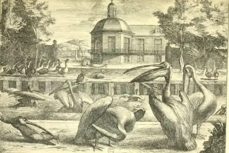 La Cour des pélicans de la Ménagerie royale de Versailles