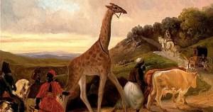La girafe superstar de Charles X