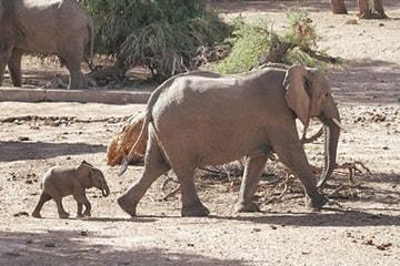 article-tourisme-elephants.1-min