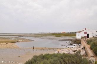 Algarve fin-110