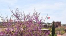 Algarve fin-49