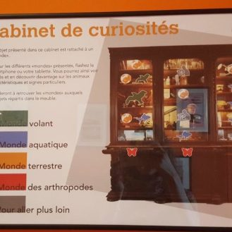 le cabinet de curiosité - la signalétique