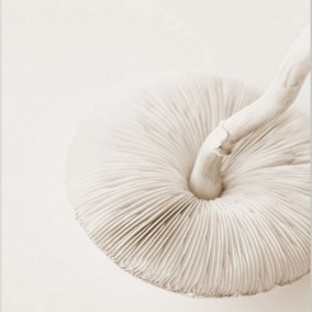 Inspiration-nekkar-champignon