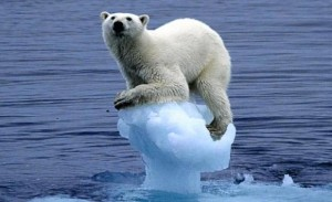 polar-bear-on-receding-ice