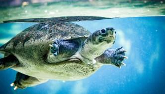 Stratégie boursière : la stratégie des tortues