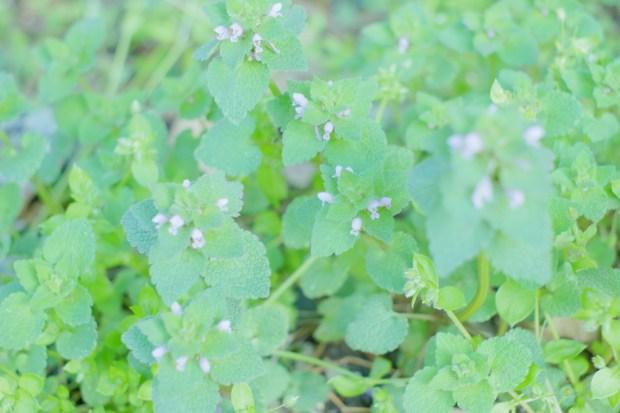 小さきもの お花が咲いていた