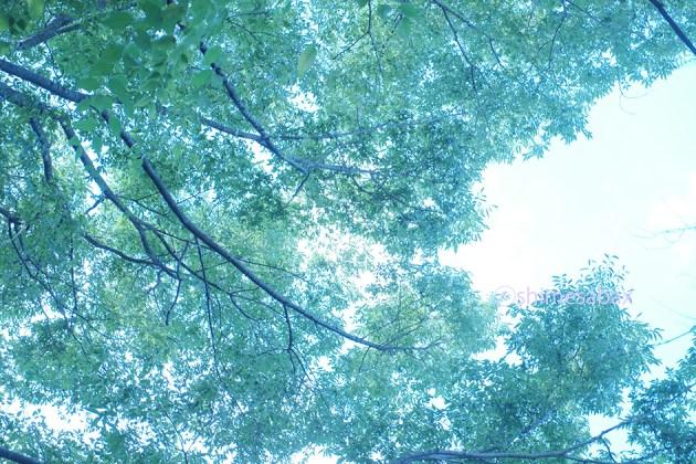 夏の緑_木陰