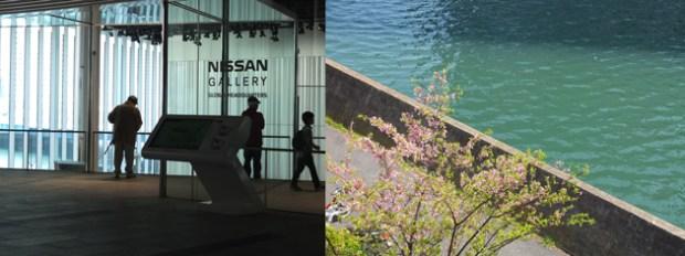 横浜 早咲きのサクラ 日産ギャラリーの対岸