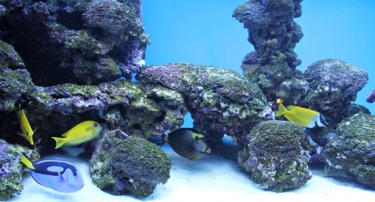 aquarium anxiolytique naturel