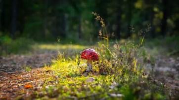 Meilleurs livres sur les champignons