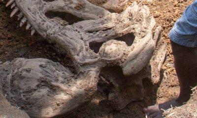 Wow! Dinosaur fossils found in Mowe Nigeria(Pictures)