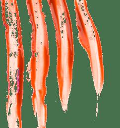 blood finger scratches [ 1382 x 2772 Pixel ]