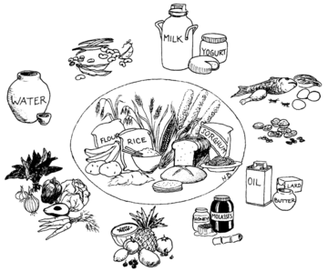 Examples Of Grow Foods PNG Transparent Examples Of Grow