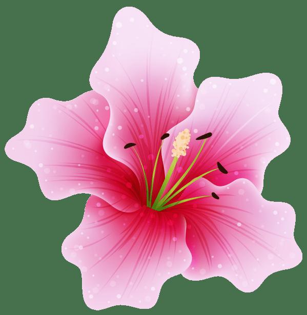 flower transparent