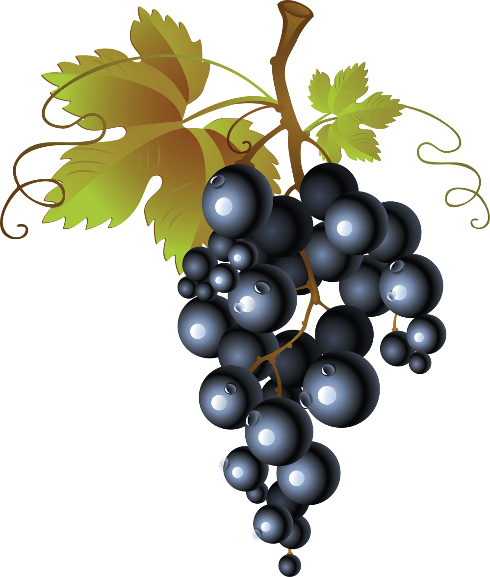 medium resolution of seedless grape facts how does a seedless grape reproduce grape vine png hd free