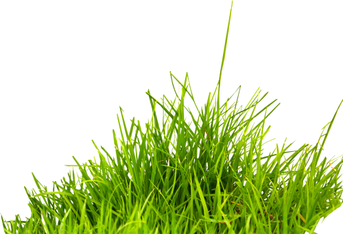 small resolution of grass png image green grass png picture grass png