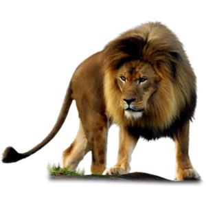 Lion PNG Transparent LionPNG Images PlusPNG