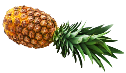 pineapple hd ananas apple transparent pngpix pluspng slice purepng exile fruits app mgt resolution