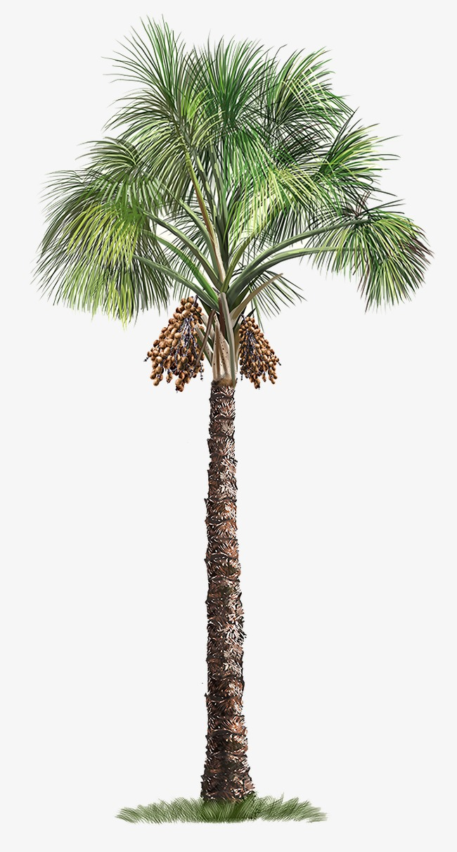Png Palm Tree Free Transparent Palm Tree Png Images Pluspng