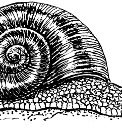 file snail psf png png snail black and white [ 2244 x 1075 Pixel ]