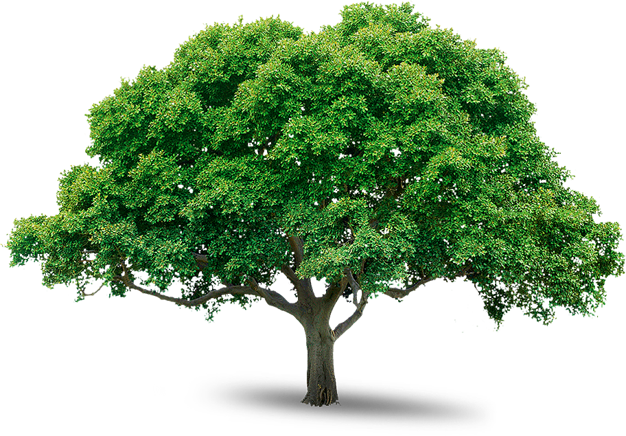 Image result for tree wide