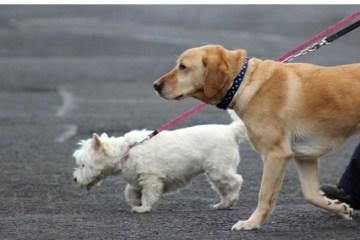 tweede hond