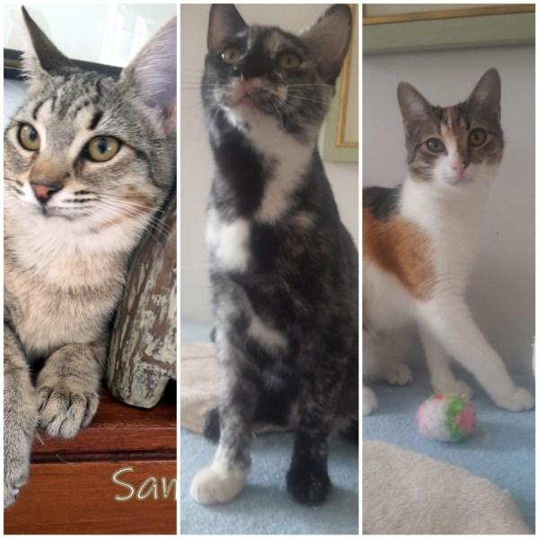 Sandra, Sasha und Salome