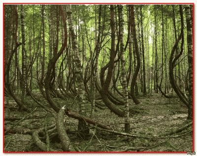 Пьяный лес под Рязанью