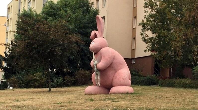 růžový králík