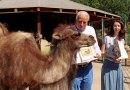 Malá velbloudice z Plzně má jméno